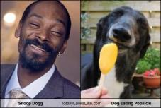 snoop-dogg-totally-looks-like-dog-eating-popsicle